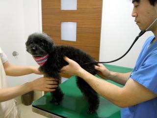 犬 身体検査