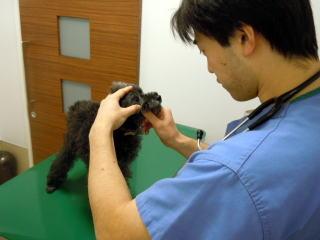 犬 身体検査2