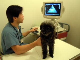 犬 超音波検査