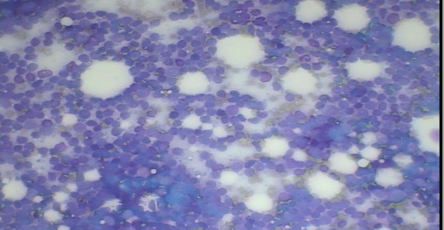 リンパ腫 細胞診 犬